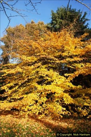 2013-11-30 Autumn in Poole, Dorset.  (6)140