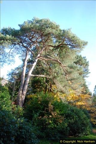 2013-11-30 Autumn in Poole, Dorset.  (8)142