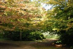2013-11-10 Autumn in Poole, Dorset.  (101)101
