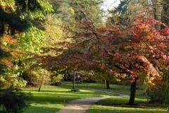 2013-11-10 Autumn in Poole, Dorset.  (102)102