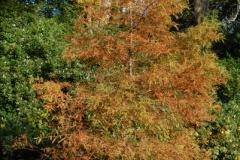 2013-11-10 Autumn in Poole, Dorset.  (28)028
