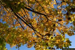2013-11-10 Autumn in Poole, Dorset.  (3)003