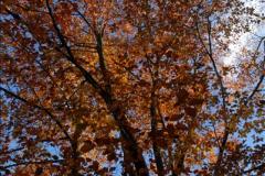 2013-11-10 Autumn in Poole, Dorset.  (34)034
