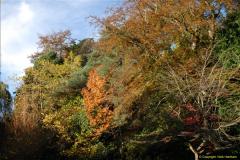 2013-11-10 Autumn in Poole, Dorset.  (61)061