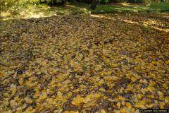 2013-11-10 Autumn in Poole, Dorset.  (65)065