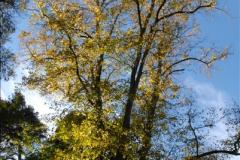 2013-11-10 Autumn in Poole, Dorset.  (66)066