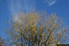 2013-11-10 Autumn in Poole, Dorset.  (67)067