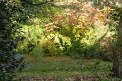 2013-11-10 Autumn in Poole, Dorset.  (68)068