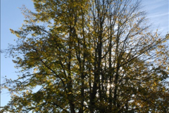 2013-11-10 Autumn in Poole, Dorset.  (7)007