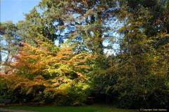 2013-11-10 Autumn in Poole, Dorset.  (75)075