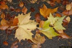 2013-11-10 Autumn in Poole, Dorset.  (80)080