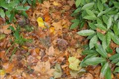 2013-11-10 Autumn in Poole, Dorset.  (81)081