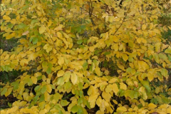 2013-11-10 Autumn in Poole, Dorset.  (84)084
