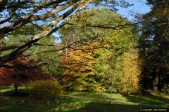 2013-11-10 Autumn in Poole, Dorset.  (88)088