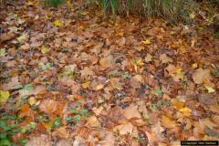 2013-11-10 Autumn in Poole, Dorset.  (90)090