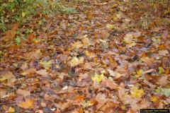 2013-11-10 Autumn in Poole, Dorset.  (91)091