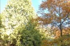 2013-11-10 Autumn in Poole, Dorset.  (94)094