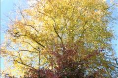 2013-11-10 Autumn in Poole, Dorset.  (96)096