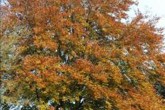 2013-11-16 Autumn in Poole, Dorset.  (3)122