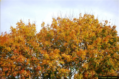 2013-11-16 Autumn in Poole, Dorset.  (5)124