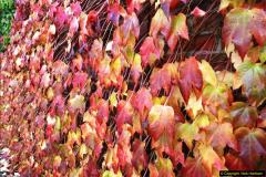 2013-11-16 Autumn in Poole, Dorset.  (7)126