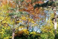 2013-11-30 Autumn in Poole, Dorset.  (11)145
