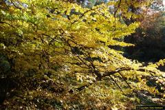 2013-11-30 Autumn in Poole, Dorset.  (14)148