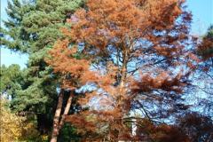 2013-11-30 Autumn in Poole, Dorset.  (17)151