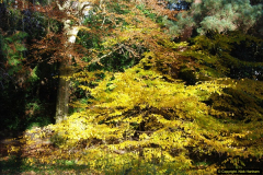 2013-11-30 Autumn in Poole, Dorset.  (19)153
