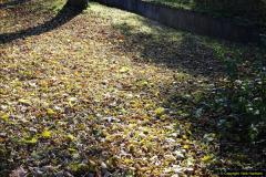 2013-11-30 Autumn in Poole, Dorset.  (2)136