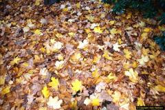 2013-11-30 Autumn in Poole, Dorset.  (26)160