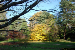 2013-11-30 Autumn in Poole, Dorset.  (29)163
