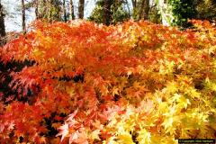 2013-11-30 Autumn in Poole, Dorset.  (33)167