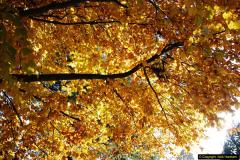2013-11-30 Autumn in Poole, Dorset.  (36)170