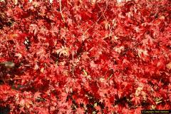 2013-11-30 Autumn in Poole, Dorset.  (39)173