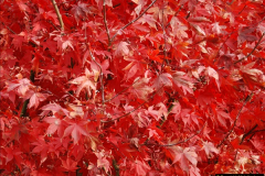 2013-11-30 Autumn in Poole, Dorset.  (40)174