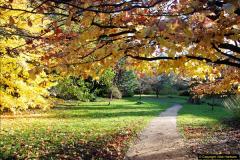 2013-11-30 Autumn in Poole, Dorset.  (5)139