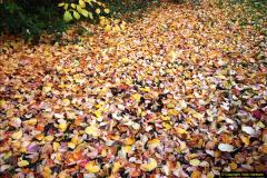 2013-11-30 Autumn in Poole, Dorset.  (9)143