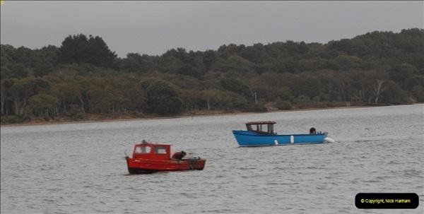 2012-10-18 Visit to Brownsea Island, Poole Harbour, Dorset.  (118)118