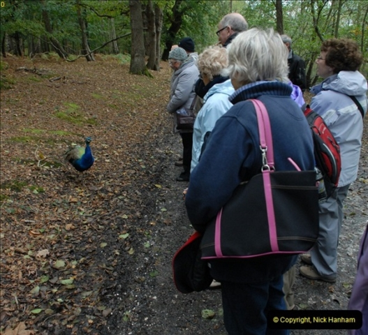 2012-10-18 Visit to Brownsea Island, Poole Harbour, Dorset.  (82)082