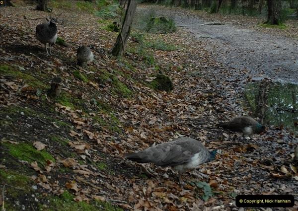 2012-10-18 Visit to Brownsea Island, Poole Harbour, Dorset.  (84)084