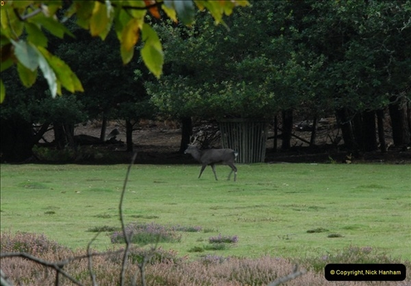 2012-10-18 Visit to Brownsea Island, Poole Harbour, Dorset.  (90)090