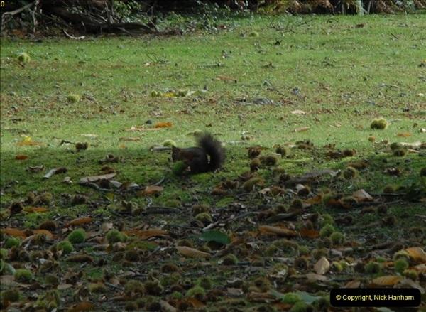2012-10-18 Visit to Brownsea Island, Poole Harbour, Dorset.  (91)091
