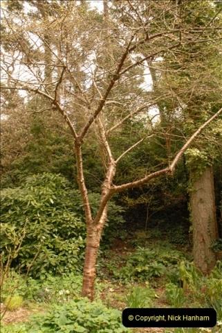 2013-04-27 Compton Acres Gardens, Poole, Dorset.  (47)047