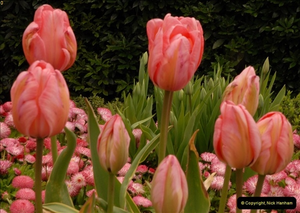 2013-04-27 Compton Acres Gardens, Poole, Dorset.  (76)076