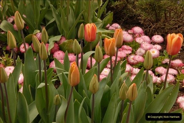 2013-04-27 Compton Acres Gardens, Poole, Dorset.  (81)081