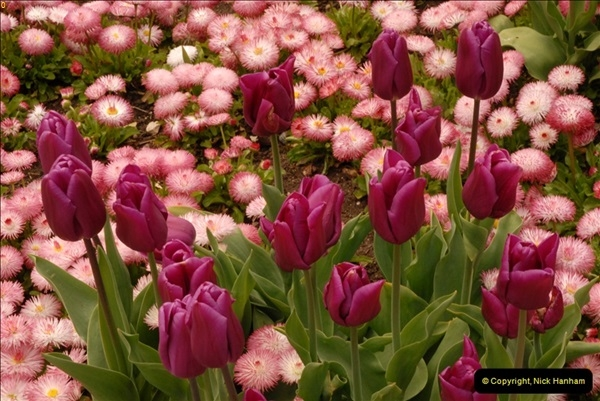 2013-04-27 Compton Acres Gardens, Poole, Dorset.  (82)082