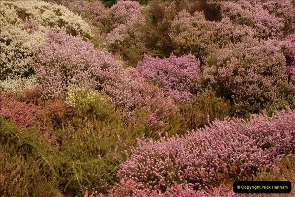 2013-04-27 Compton Acres Gardens, Poole, Dorset.  (87)087