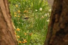 2013-04-27 Compton Acres Gardens, Poole, Dorset.  (35)035