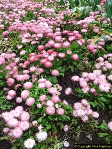 2015-05-22 Compton Acres Gardens, Poole, Dorset.  (36)